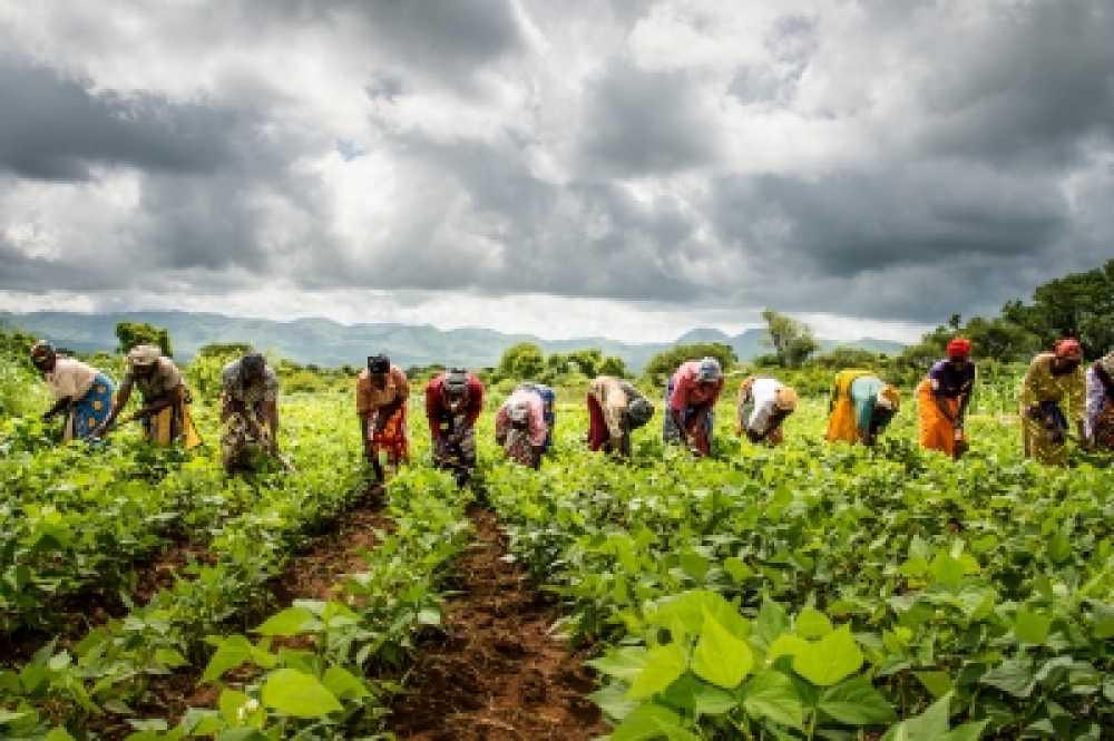 institut microfinance vola mahasoa madagascar  image RAISON D'ETRE DE VOLA MAHASOA
